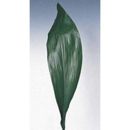 Bulk Aspidistra Green
