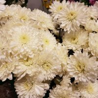 Chrysanthemum Spray Cushion