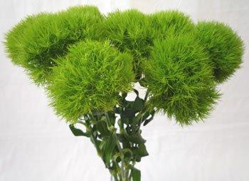 Green Dianthus