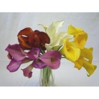 Calla Lily Mini Assorted