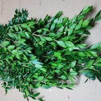 Myrtle Greenery