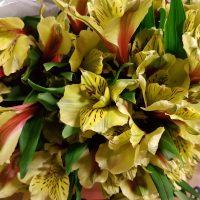 Alstroemeria Peruvian Lily Yellow