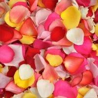 Rose Petals Assorted Colors