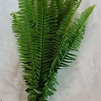 Sword Fern Greens