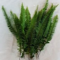 Sword Fern Greens 2