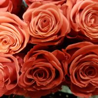 Orange Roses Crush
