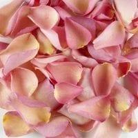 Pink Rose Petals Toronto