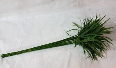 Umbrella Palm Cut Greenery