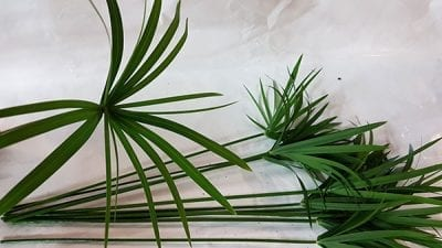 Umbrella Palm Cut Greenery 3