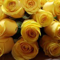 Bulk Yellow Roses