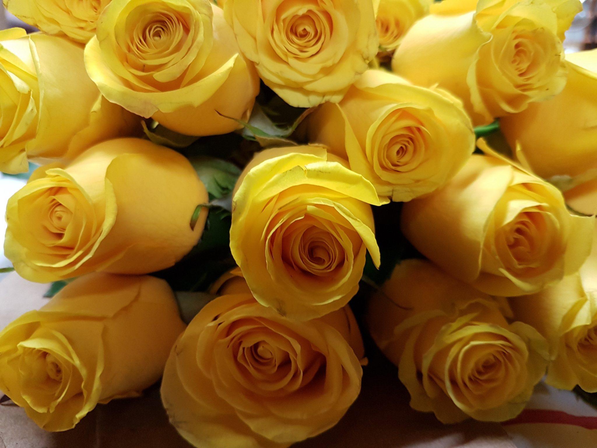 Bulk yellow roses 100 stems 40 cm toronto bulk flowers bulk yellow roses mightylinksfo