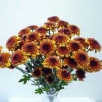 Chrysanthemum Spray Button Bronze