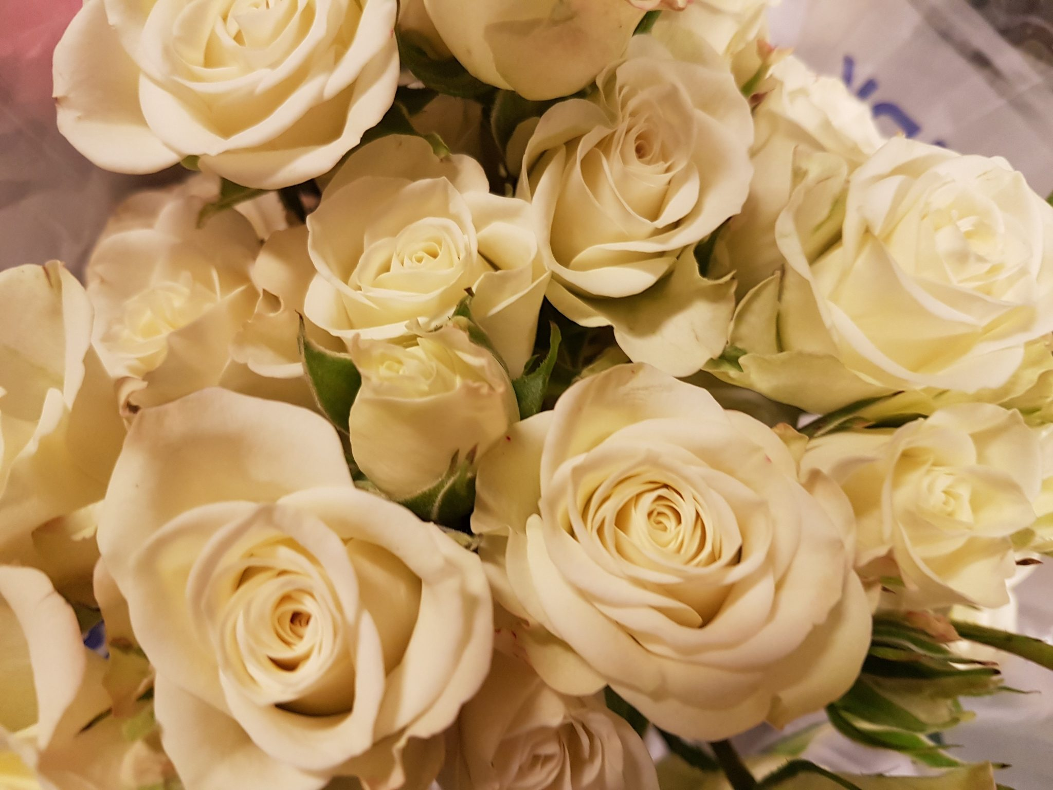 White Mini Spray Roses