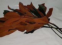 Magnolia Greenery 2