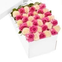 3 Dozen Pink and White Roses