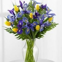 The Canadian flowers Iris and Tulip bouquet is all about birthday celebration