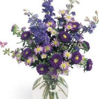 September birth flowers is the most royal birthday gift for your loved ones