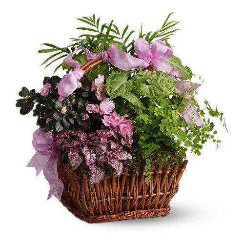 Nature Flowering Garden
