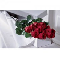12 long stem roses boxed, the classical floral gift for Valentine's Day.