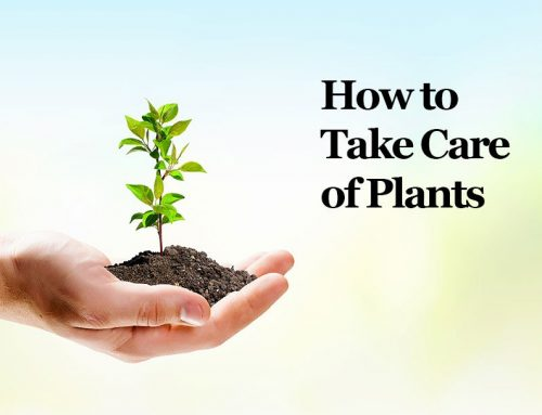 Tips on How to Take Care of Plants For Plant Lovers