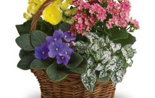 Assorted Flowering Plants