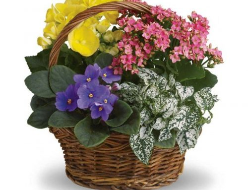 Send Flowering Plants To Your Loved Ones