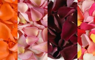 Rose Petals For Valentine's Day