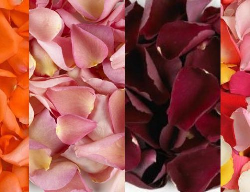 Create Memories With Rose Petals For Valentine's Day