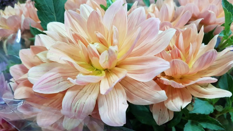 Use Dahlia Flowers To Decorate Your Wedding Tables