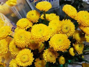 Chrysanthemum Spray Button Yellow, Wonderful Addition to Any Floral Arrangement