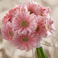 Gerbera Daisy Wedding Bouquets
