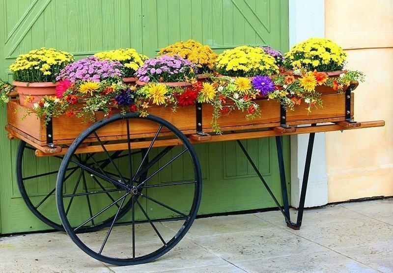 Spray Chrysanthemums