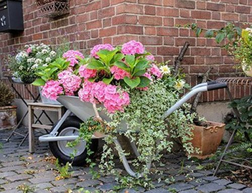 All You Need To Know About Types Of Hydrangea