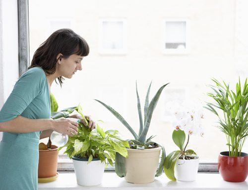 How To Keep Your Indoor Plants Alive In Winters?