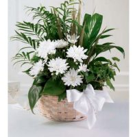 White Garden Dish by Toronto Florist