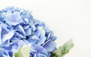 meaning of hydrangea