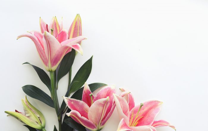 Meaning of lilies