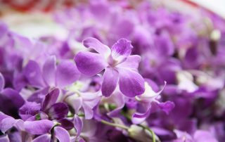 Meanings of orchids