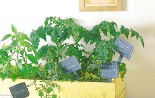 indoor plants low lights